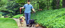 10 Ways to Become a Successful Dog Walker